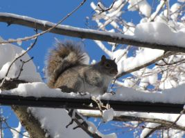 Squirrel in the tree by LDdog