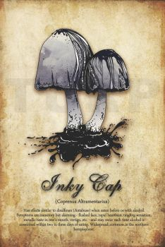 Inky Cap by turp