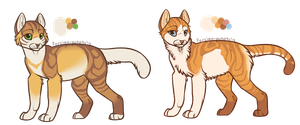 Gold kittens sold by ClimbAdopts