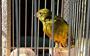 Little bird in a cage by SGMittens25