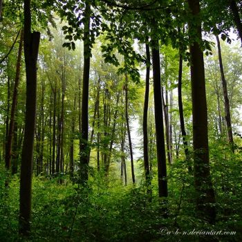 green forest by a-b-n