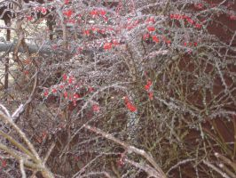 Branches of Ice and Berries by JadedTopaz