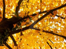 Fall in Lawrence, Kansas 8 by Jaybaby11