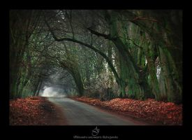 ...in to the woods... by canismaioris