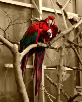 Sepia Macaw by TiffyLiz