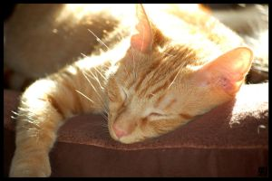 This Is My Sunbeam by MauserGirl