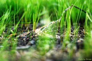 Grass and stick by Jasumy