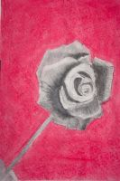 Charcoal Rose by GuardianLord