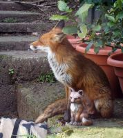 REAL FOX AND PLASTIC FOX by tibbet2000