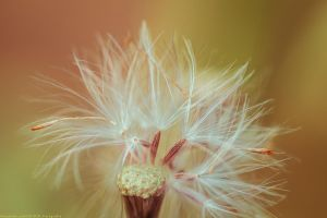 the last seed by CliffWFotografie