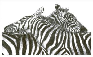 zebra card by emmawood