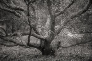 Branching Tree by aponom