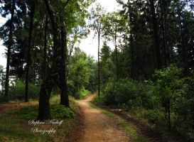 The coolness of the forest by Korni