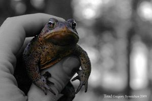 Mama Toad 2009 by UffdaGreg