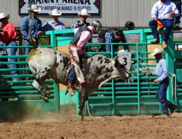 Bull Busting Stock 02 by Rejects-Stock