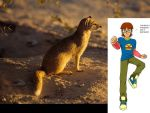 I can track a mongoose by daDoodyfaced
