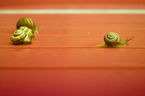 run run...snail race by bluesoft82