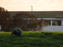 Out the Morning's Door by SaintElmosWire