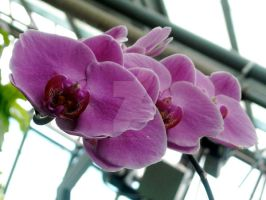Rank of Orchids by John-Furie-Zacharias