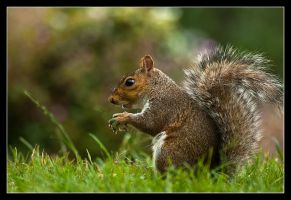 Mr squirrel by Alexandra35