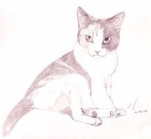 Bandit - pencil by ashkey