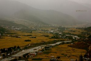 scene from paro by pLateauce