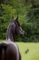 Black stallion by OceanEagle