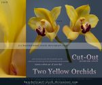 Two Yellow Orchids Cut Out by kuschelirmel-stock