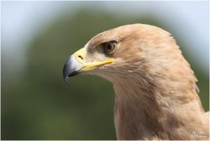 2011-108 Tawny Eagle by W0LLE