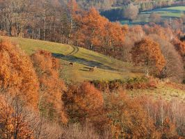 Autumn Horses on Hills by Saberryna
