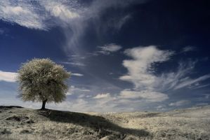 whispering wind - infrared by Konczey-Zsolt