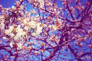 Spring in Gothenburg II by elskamer
