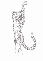 ''Daily'' sketch - Leopard Stretching. by 0laffson