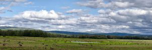 Creamers Field Panorama by AKNorthPolar