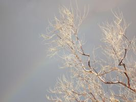 A Hint Of Rainbow by Speck2