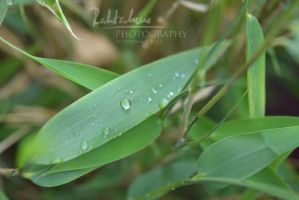 Bamboo April 2015_2 by Rahtschini