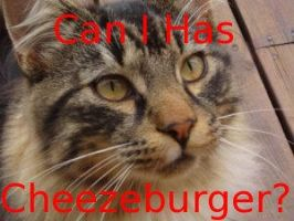 Cheezeburger? by Aapur