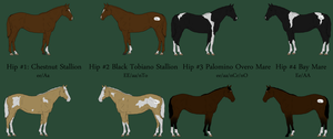 Archadian Warmblood Auction by labsbykibam