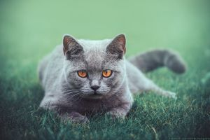 look at me by CliffWFotografie