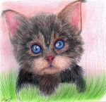 Brownie, but nehny as a kitten) by Anastasya-Murashova