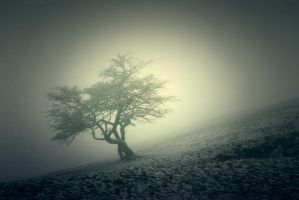 Alone in the fog by Snowflake20