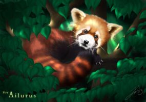 Red Panda by wildtoele