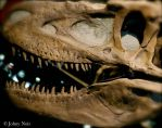 T-Rex Close Up 2 by JohnyNoir