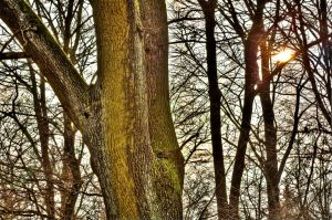 Wood sunset HDR by thomasvillhauer
