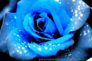 Blue Rose. by PeriwinkleEyes