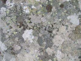 Stone Texture 03 by Siobhan68