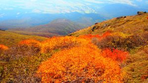 The autumnal leaves of the summit in Mt. Kuju by Flower-Kitten