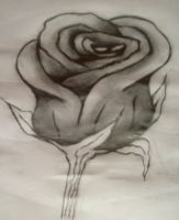 Rose by Neddle