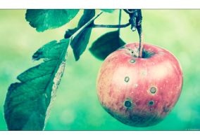 Apple Time by Limaria