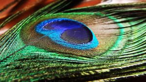 Peacock's feather by ColdWinter97
